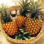 ゴールドバレル(パイナップル)の旬はいつで価格は?食べごろや食べ方は?缶詰や苗も【うまいッ!】
